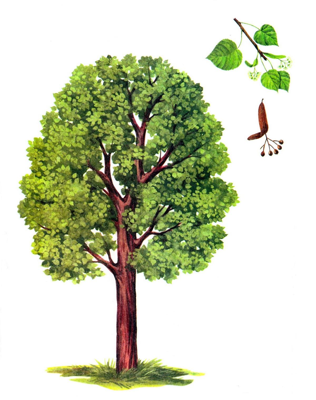 Деревья картинки карточки