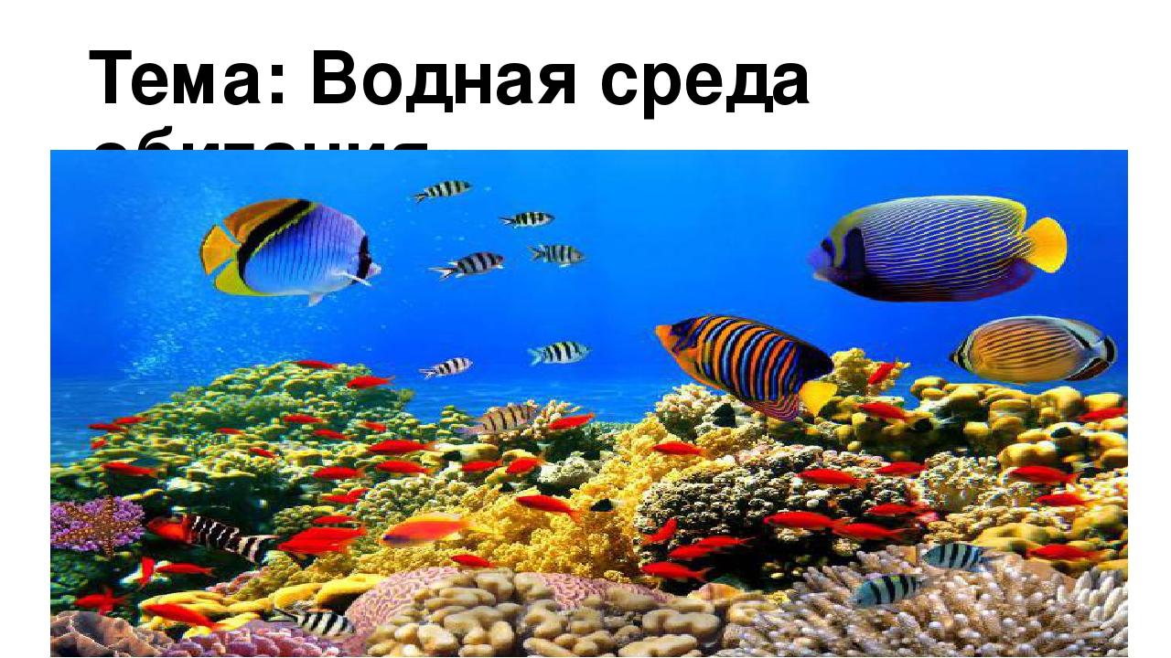Доклад на тему среда обитания водная 534