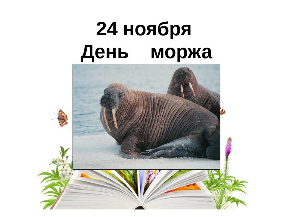 Открытки день моржа