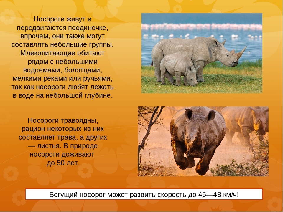 rhinoceros comparison Sos rhino is a non-profit, international foundation dedicated to preserving the five rhinoceros species in their natural habitats our conservation programs combine research, education, marketing and advocacy, all working collectively to achieve sustainable results it is our goal to secure a place for this ancient animal in.