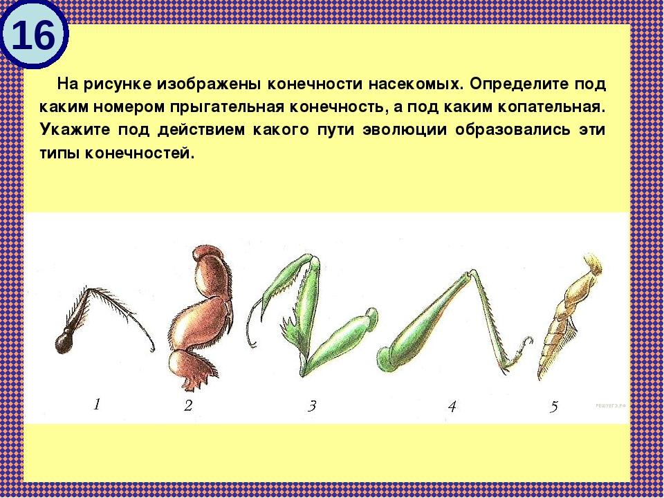 типы конечностей насекомых картинки применения этого необычного