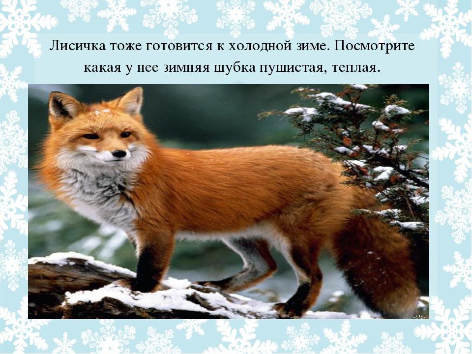 картинки как лиса готовится к зиме цветения фиалки