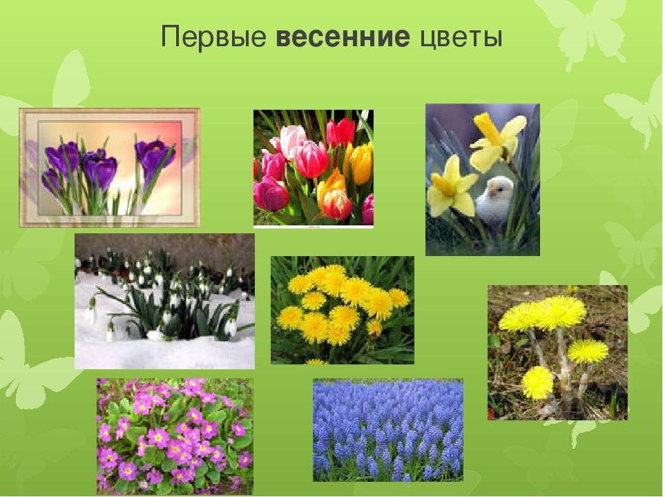 этих презентация картинок цветов люблю