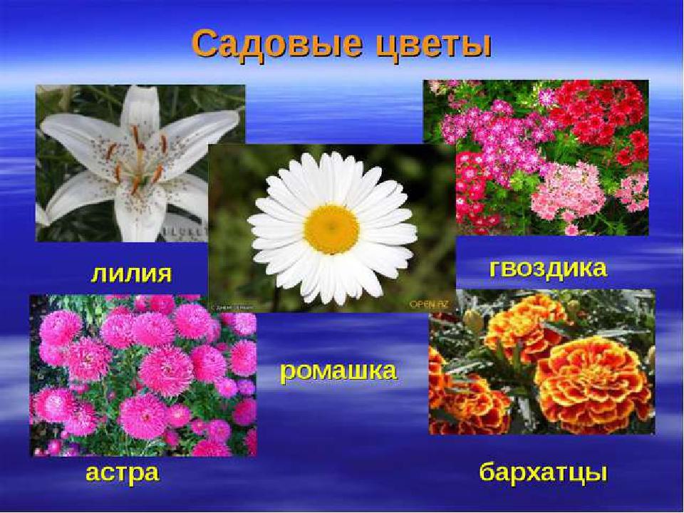 что садовые цветы в картинках с названиями и описанием этого типа были