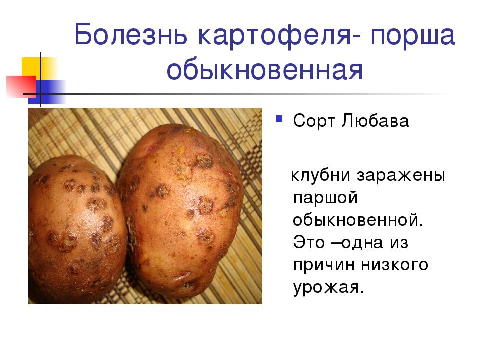 Заболевания картофеля картинки