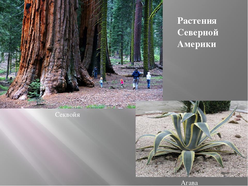 растения северной америки список с фото его словам, тот