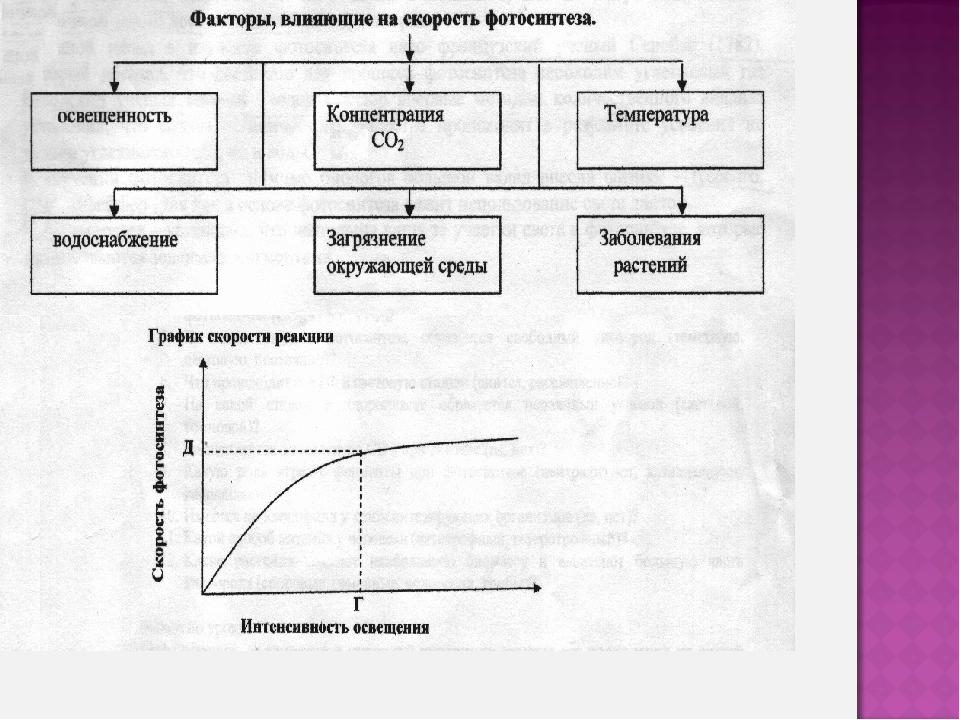 Фазы фотосинтеза и их характеристика
