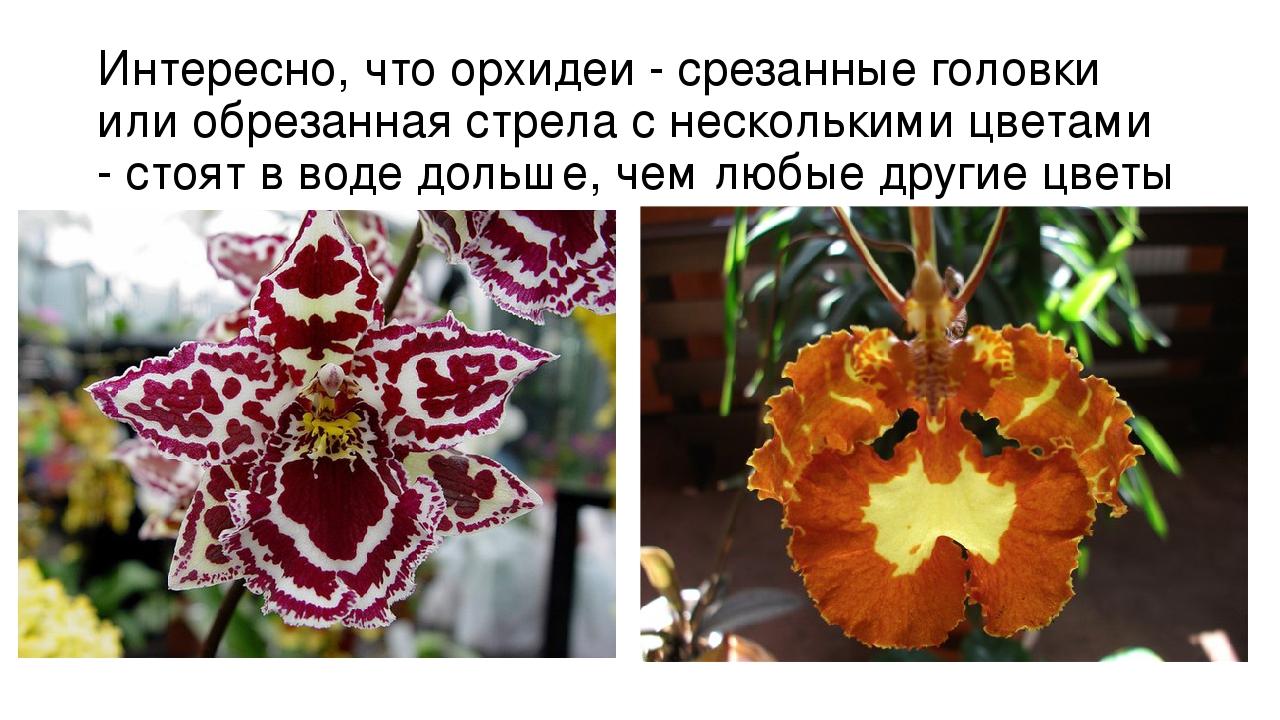 Американцы на Черном море 2 (Amerikalilar Karadenizde 2, 2007) рекомендации