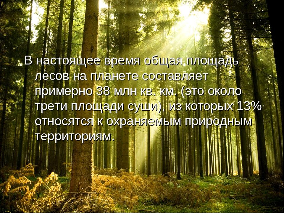 Международный день леса открытки, картинки