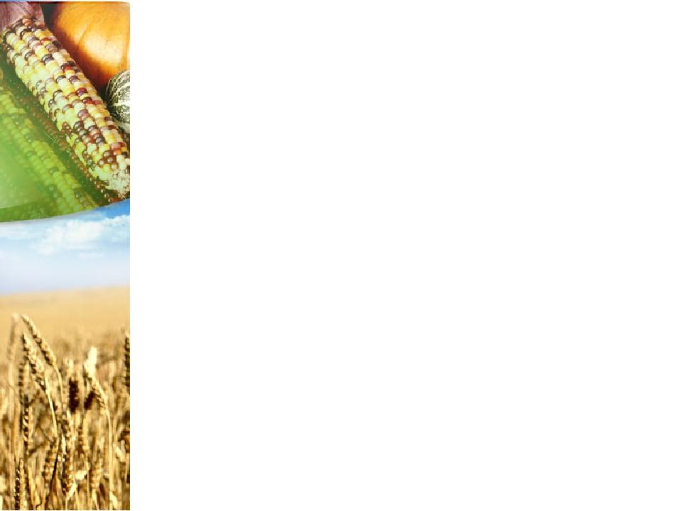 Обязанности агронома У агронома очень интересная работа. Он испытывает новые...