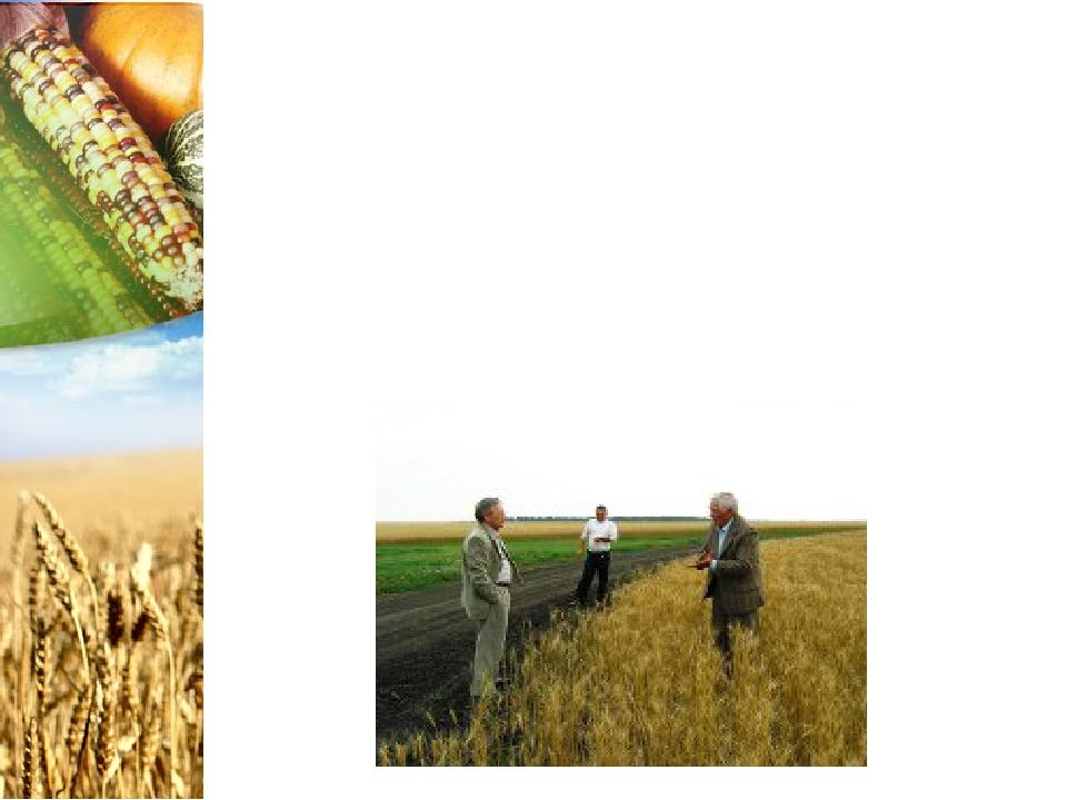 Как стать агрономом Готовят специалистов-агрономов как вузы, так и техникумы...