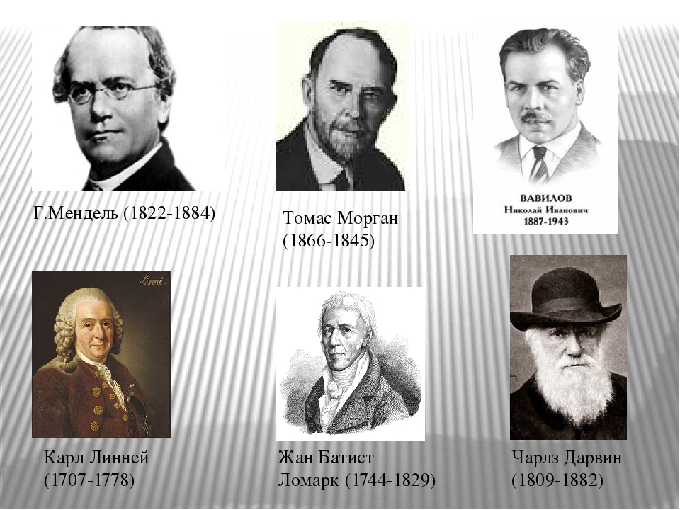 mendel vs darwin But darwin never knew of mendel he never read his published findings outlining the basic laws of genetic inheritance [and though mendel visited london briefly in 1862, darwin was not in town and.