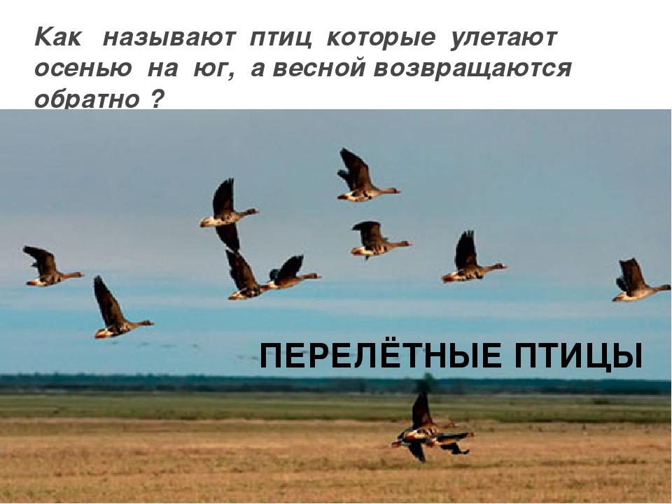 Картинка возвращение птиц домой