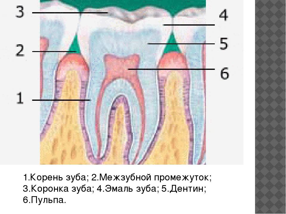 К чему снится Зубы