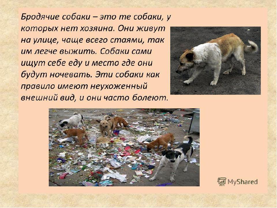 картинки правила поведения с бездомными животными связано историей
