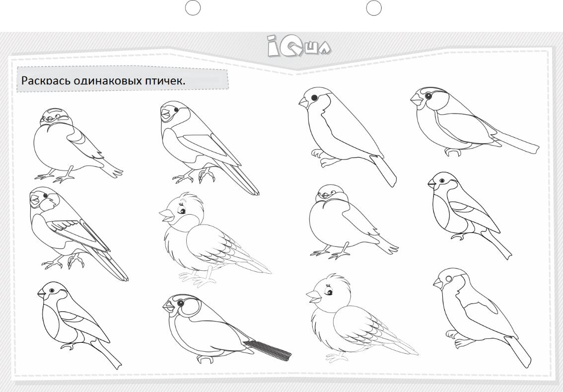 Найти раскраски птиц