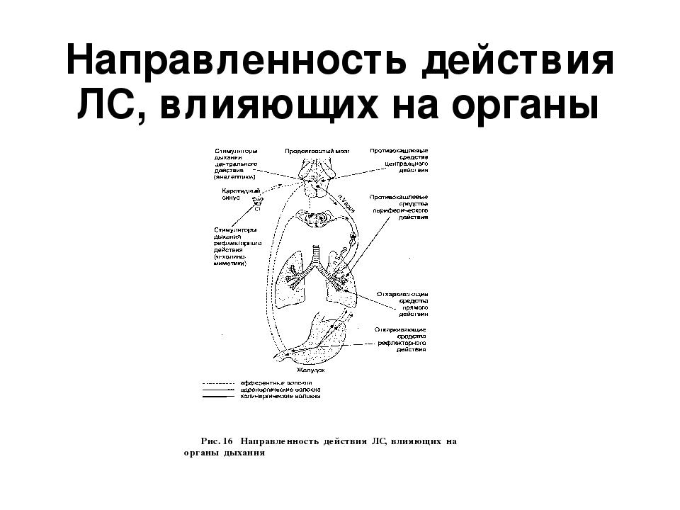 Направленность действия ЛС, влияющих на органы дыхания