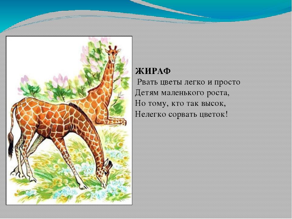 Картинки о животных с текстами