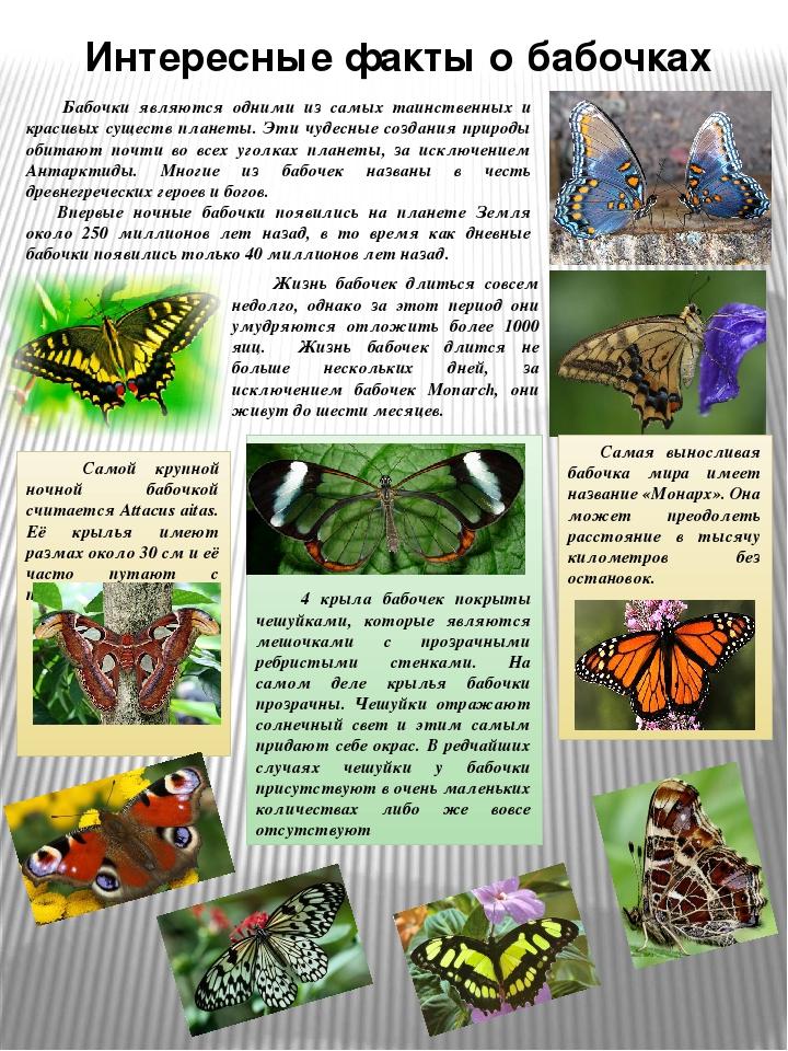 город анапа, интересные факты про биологию с фото поэта поделился воспоминаниями