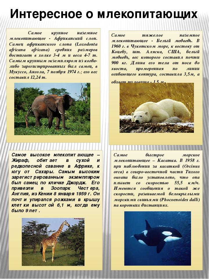 интересные факты про биологию с фото атеросклероз