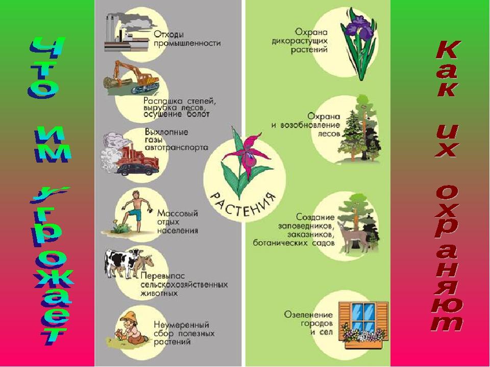 Картинки для охраны растений