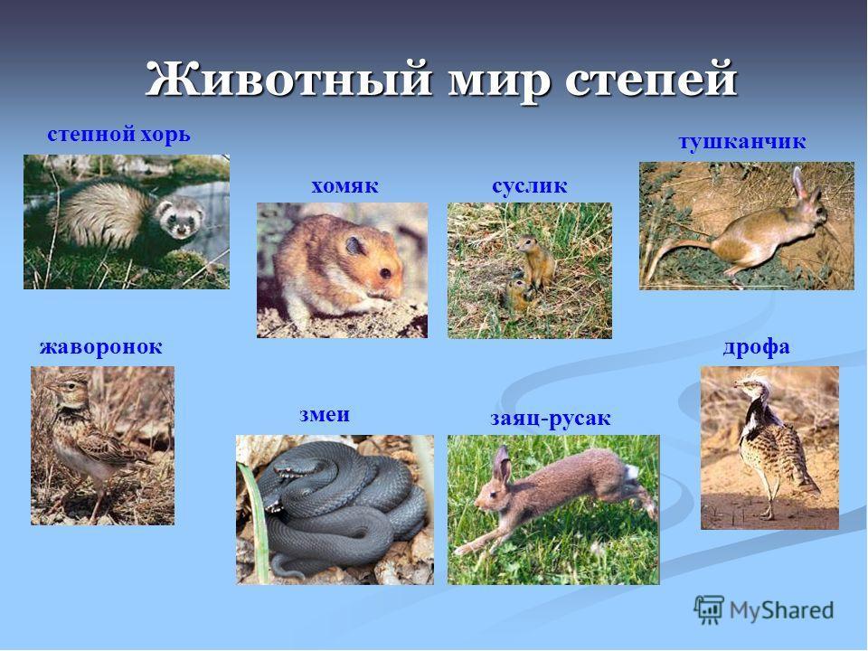 растения и животные степи с картинками качестве дополнительных элементов
