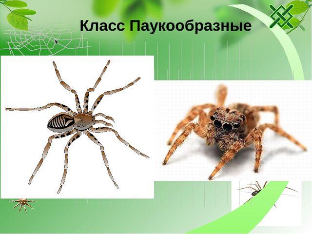 Тест по биодогии 7 класс на тему паукообразные