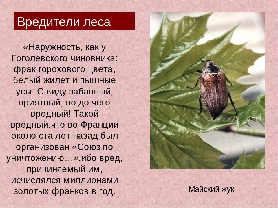 «Наружность, как у Гоголевского чиновника: фрак горохового цвета, белый жилет...