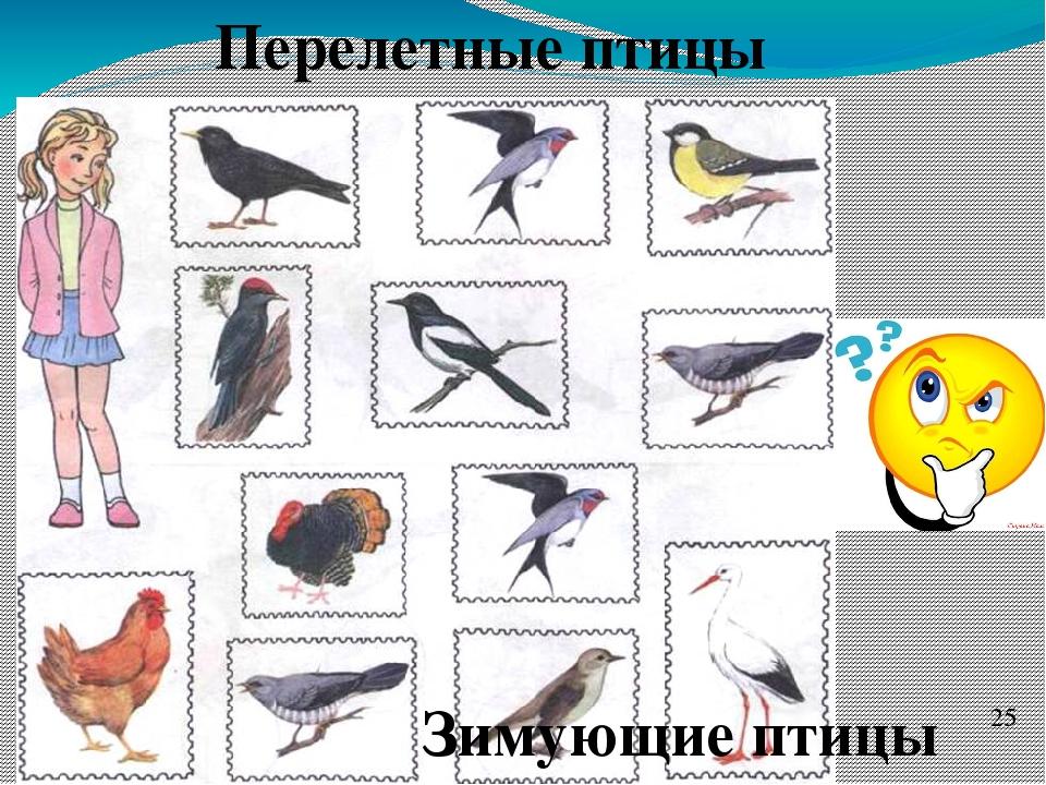 игры на тему перелетные птицы картинки для социальных сетей