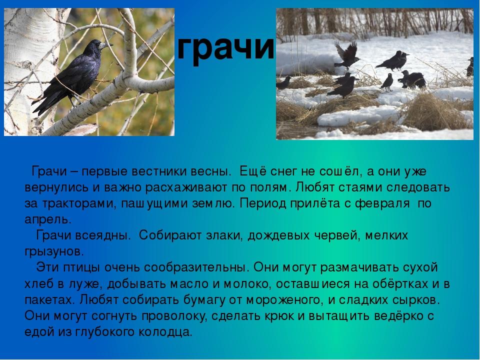 Картинки на тему птицы весной для презентации, крестной день рождения