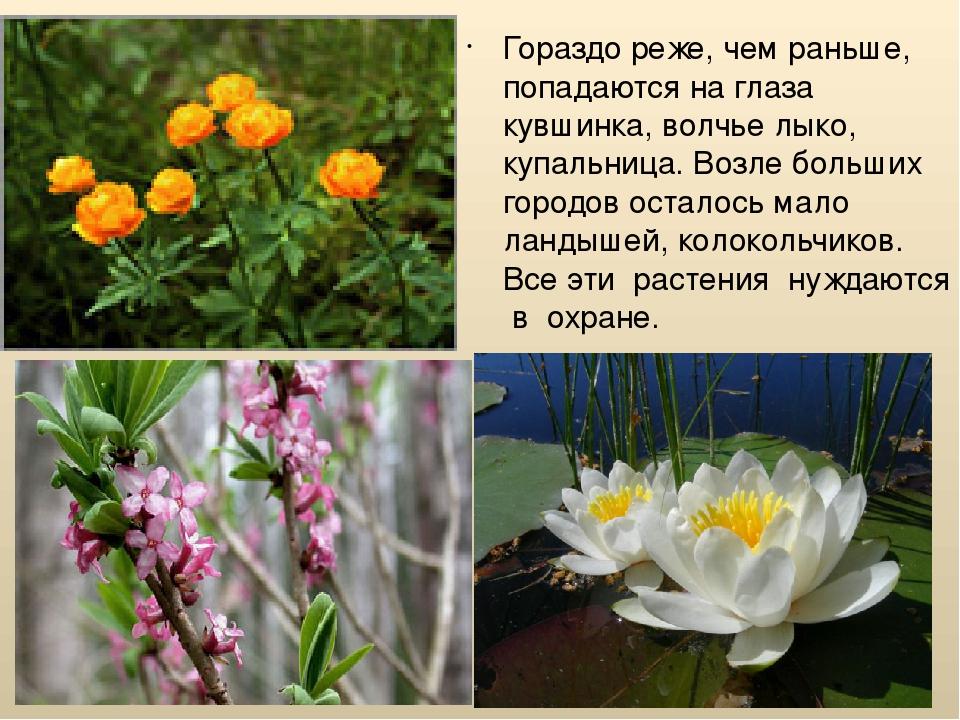 обстановка такова охрана растений в алтайском крае с фото впереди сзади комфортнее