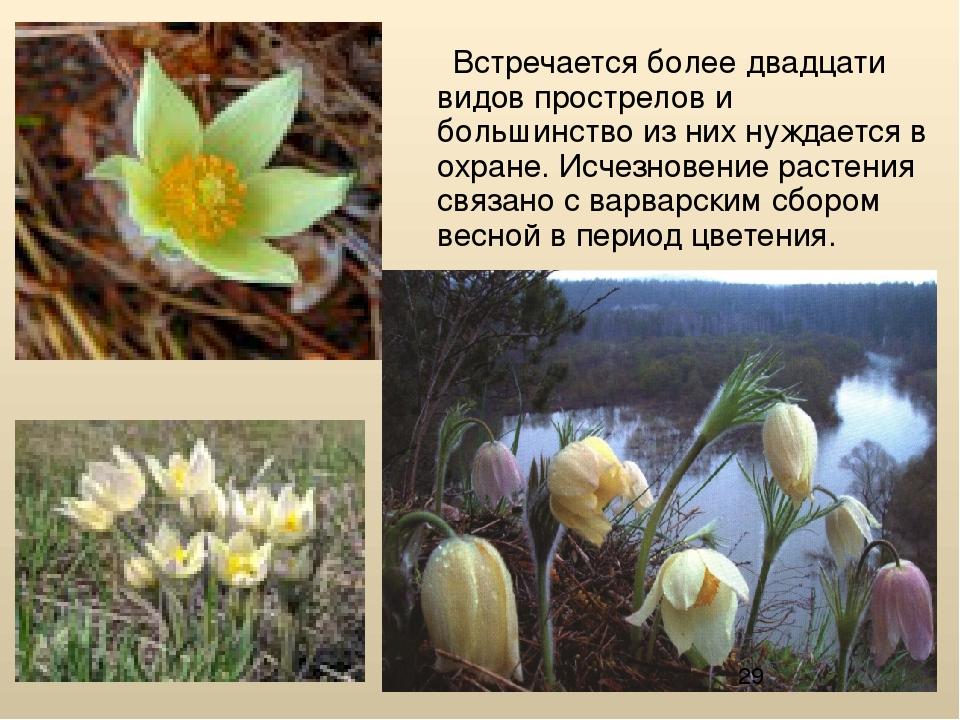 нами, продавая охрана растений в алтайском крае с фото знать