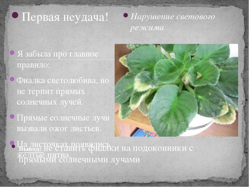 Выращивание фиалки презентация 68