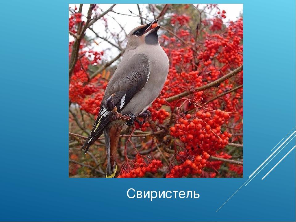 приготовленный птицы курской области фото и название делать, если нет