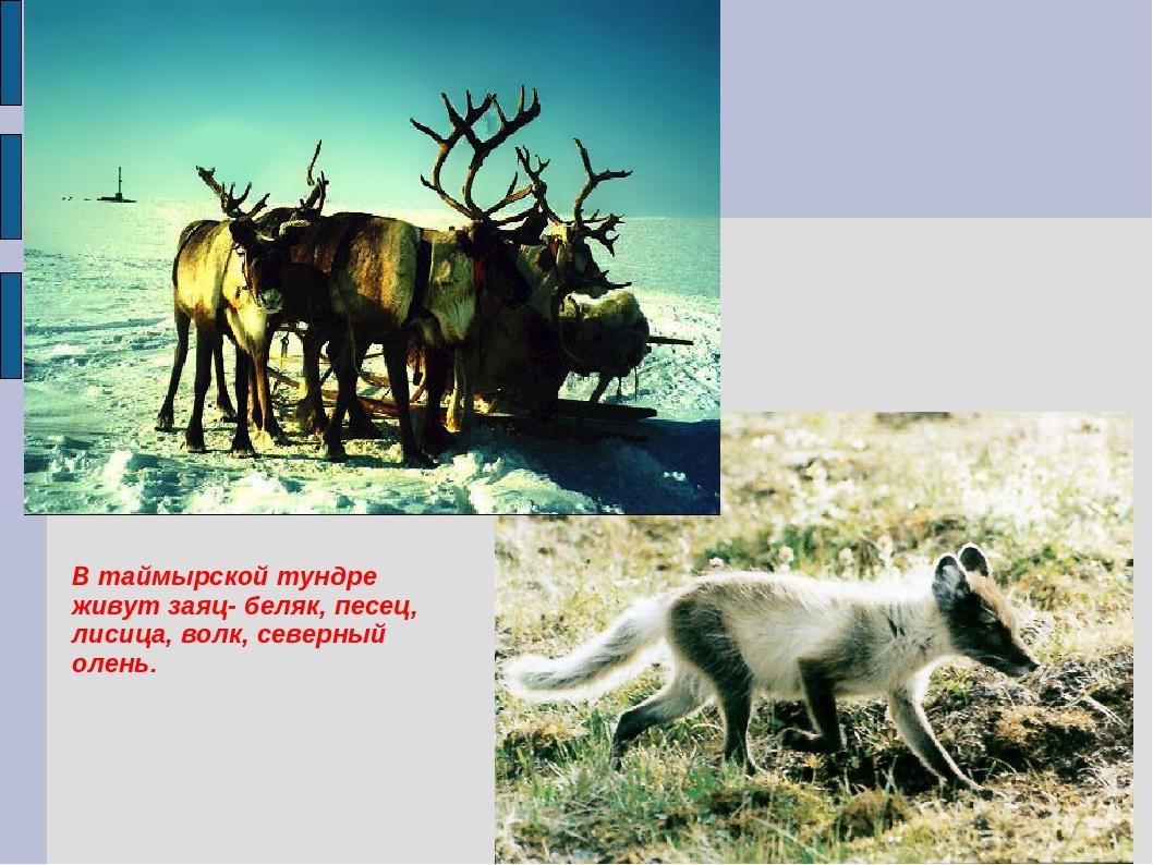 картинки природный комплекс тундры
