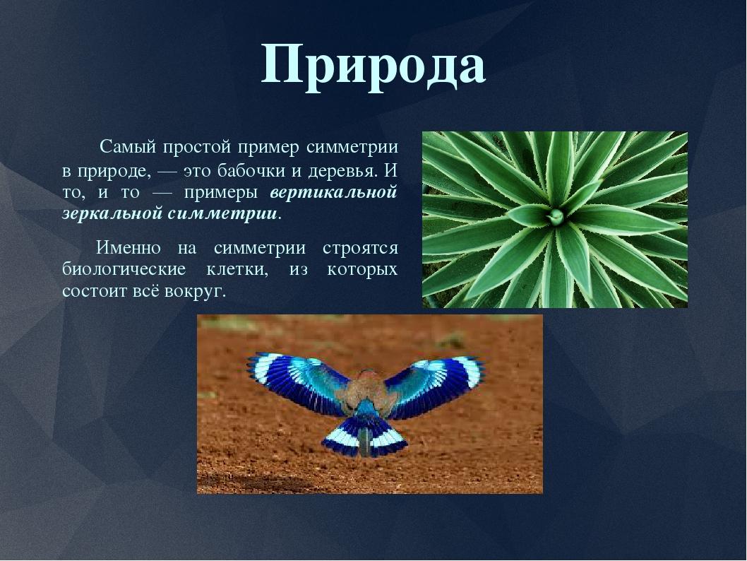 Симметрия в природе примеры с картинками и гиперссылками это самые