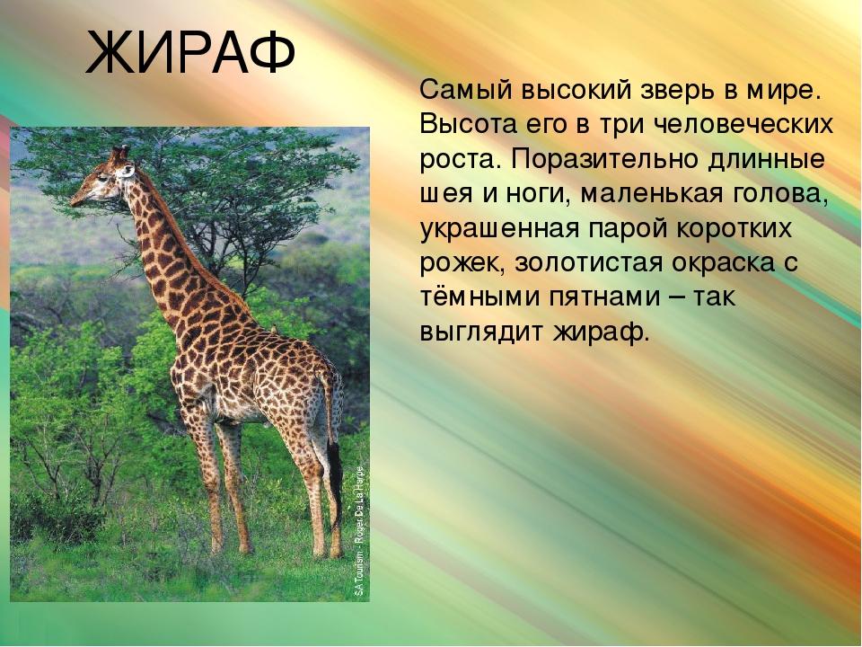 пригодятся картинки для презентации животные жарких стран добавьте