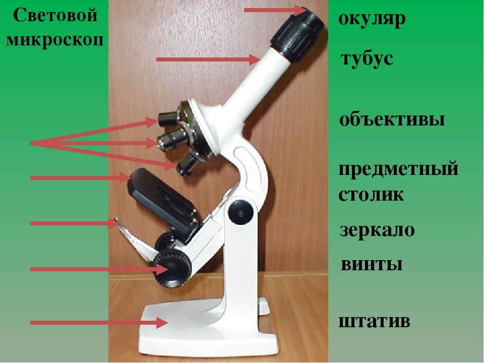Световой микроскоп окуляр тубус объективы предметный столик зеркало винты шта...