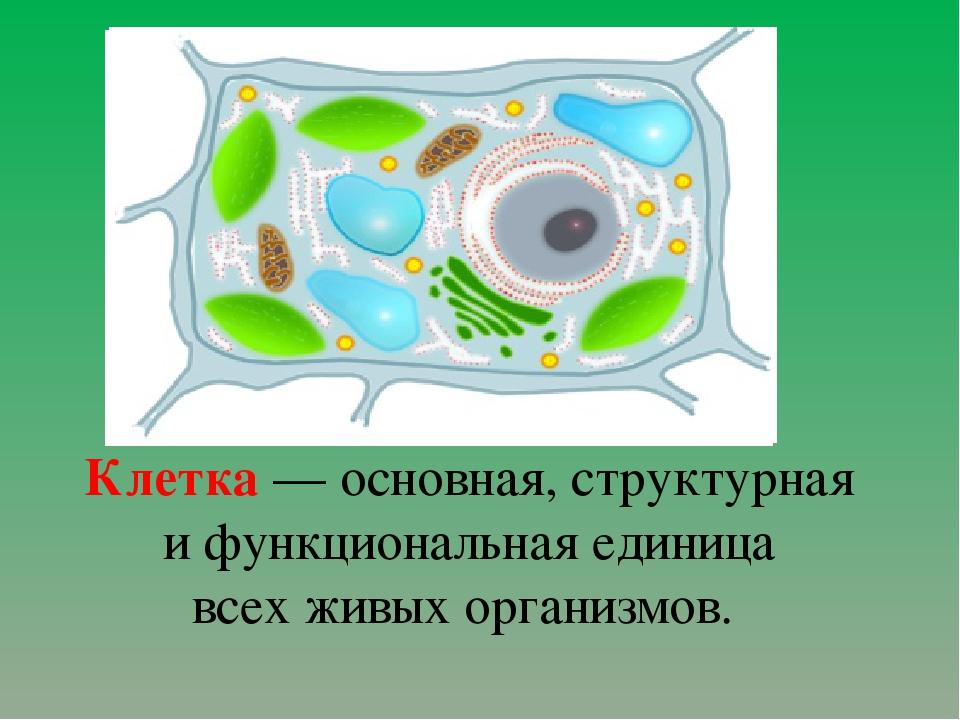 Клетка— основная, структурная и функциональная единица всех живых организмов.