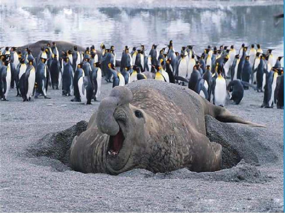 Смотреть фотографии пингвинов и белых мишек эти