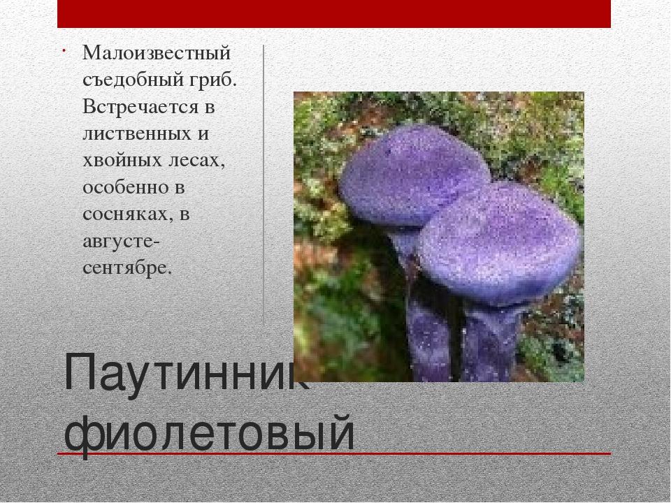 Ядовитый гриб паутинник картинки и текст с описанием
