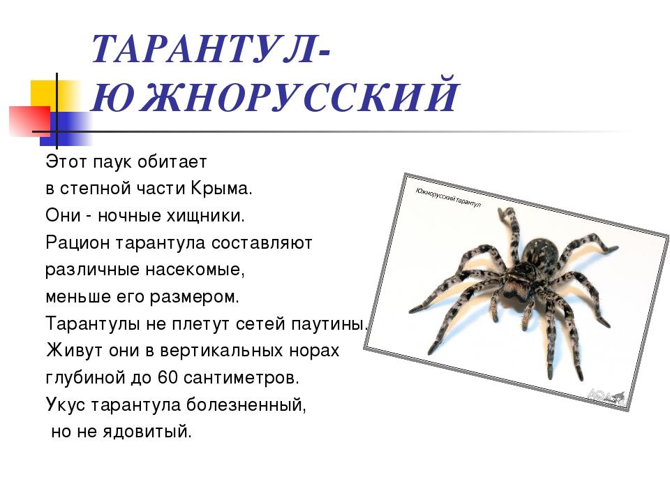 Презентации про пауков в картинках