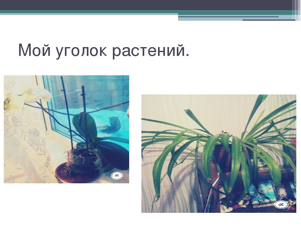 Мой уголок растений.