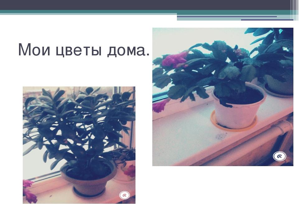 Мои цветы дома.