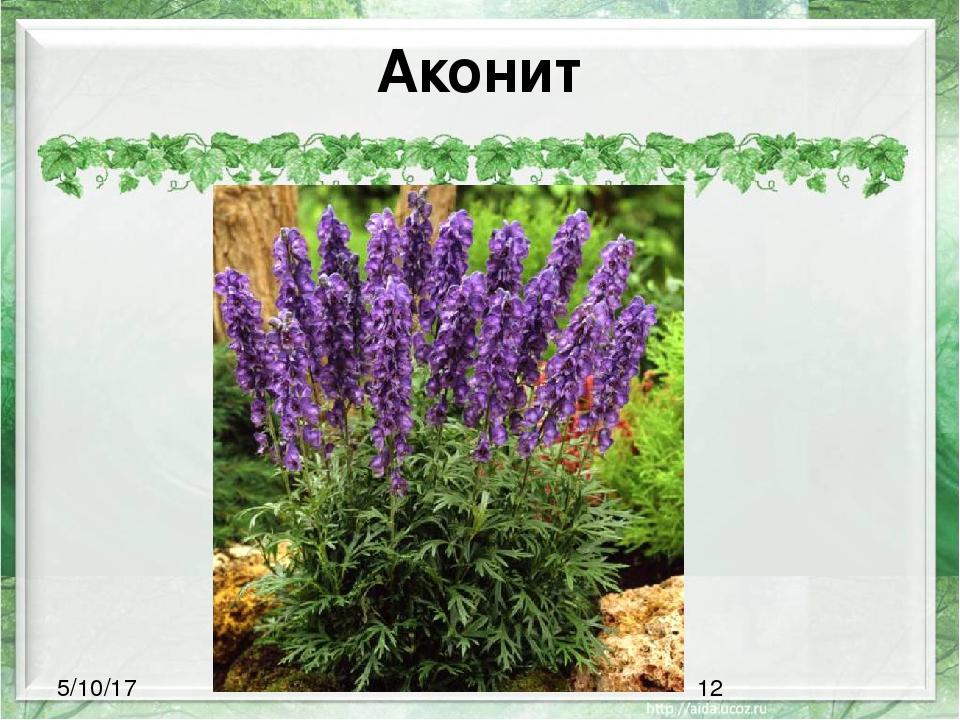 субботу все ядовитые цветы крыма фото с описанием косметический ремонт