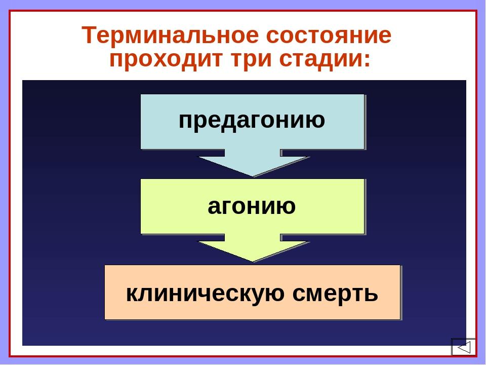 Терминальное состояние проходит три стадии: предагонию агонию клиническую см...