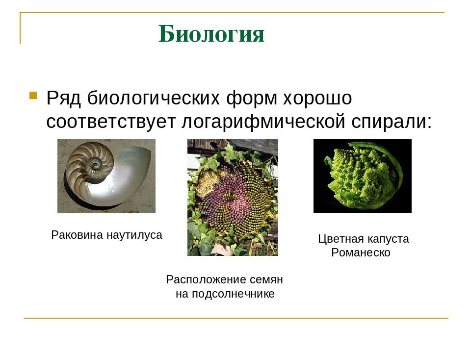 Биология Ряд биологических форм хорошо соответствуетлогарифмической спирали...