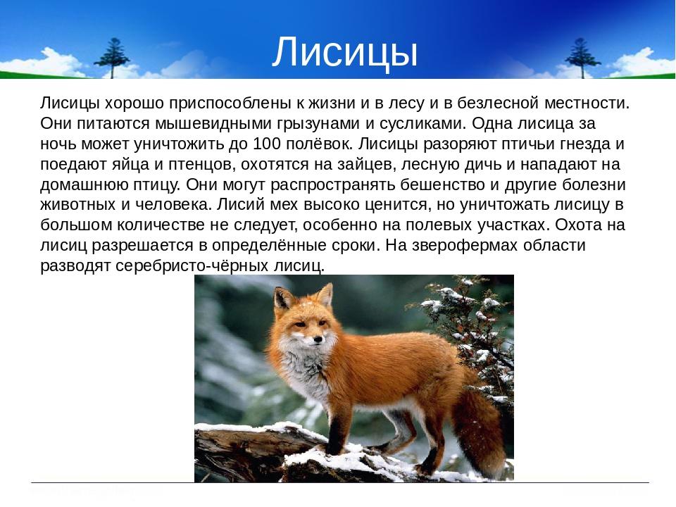 панельных домов животные курской области фото и описание рисунок