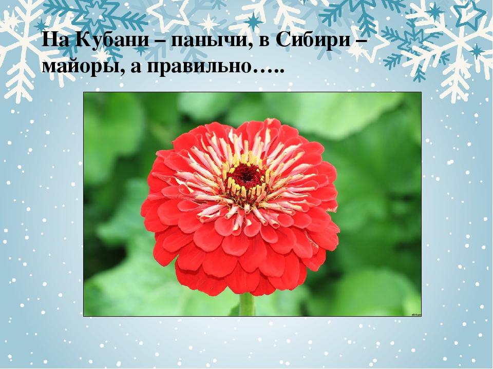 На Кубани – панычи, в Сибири – майоры, а правильно…..