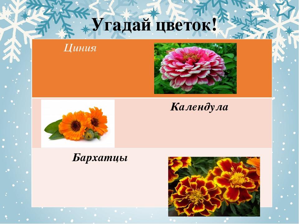Угадай цветок! Циния Календула Бархатцы